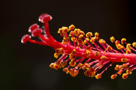Stamen of flower Stock Photo