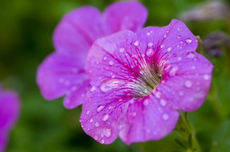 Dew on flower Stock Photo