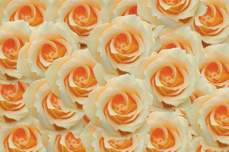 beautiful big bouquet of yellow roses for the background