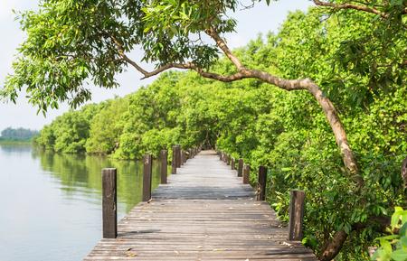 Wood bridge for nature walk in mangroves.