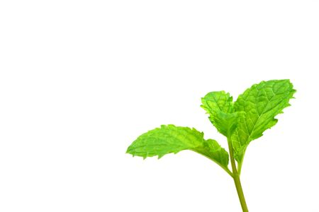 Top of Mint leaves on a white background