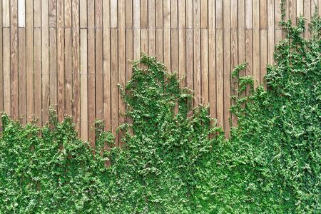 Ivy on the wall made of wood, making it a beautiful background image Stockfoto - 128513242