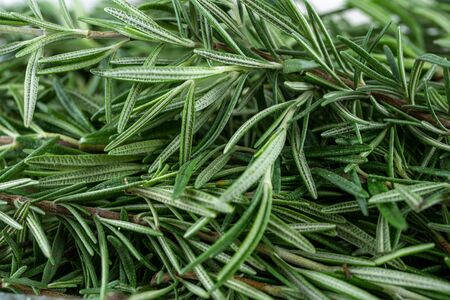 Close-up ,Freshly picked Rosemary herbs from garden. organic for cooking