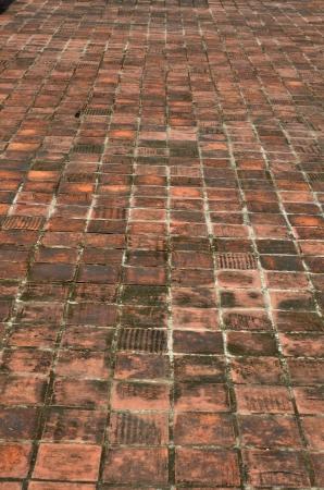 perspectiva lineal: piso de ladrillo, piso de ladrillo vertical naranja antig�edades con el hongo h�medo negro