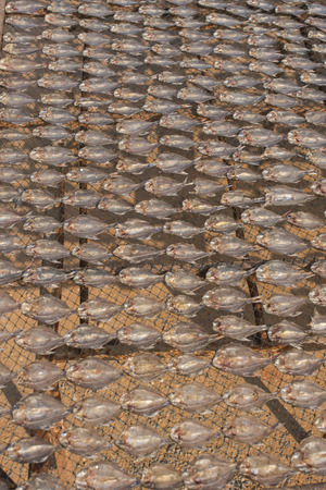 striped snakehead fish: Dried fish, Dried striped snakehead fish,South Thailand