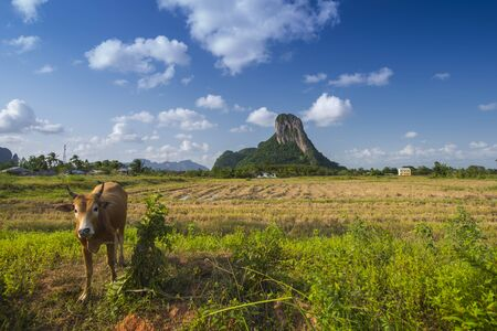 Mountain is landmark in Phatthalung province name  Khao Aok talu  The Hole Mountain with cow Stock Photo
