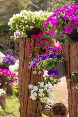show garden: Detail of colorful flowers at flower and garden show Stock Photo