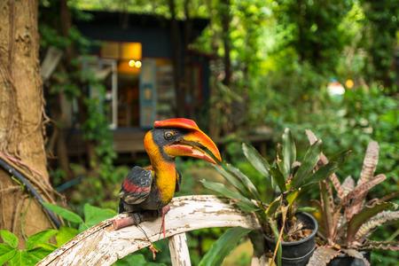 hornbill: Great Hornbill bird doll decor in garden