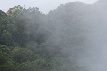 blue mountains tree frog: foggy moutain of Kio Mae Pan, Chiang Mai, Thailand Stock Photo