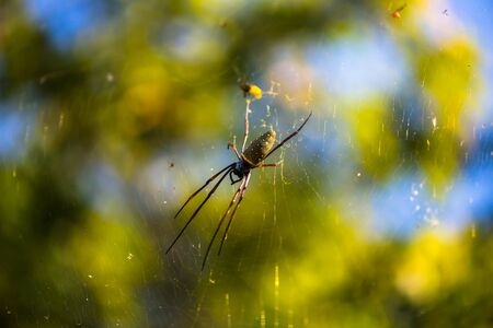 Spider on a spider web with natural background
