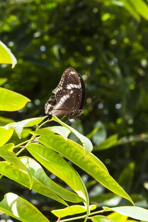 Butterfly beautiful in the nature, wildlife, Natural green background
