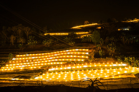 Flower farm on Doi Inthanon mountain in Chiang Mai province of Thailand., Night scene