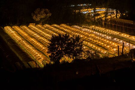 hotbed: Flower farm on Doi Inthanon mountain in Chiang Mai province of Thailand., Night scene