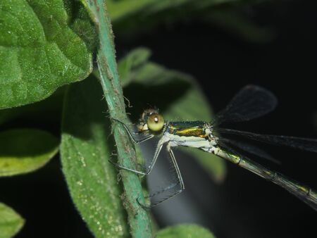 Dragonfly sitting on a rope. Flying predatory insect. Macro. Stock Photo