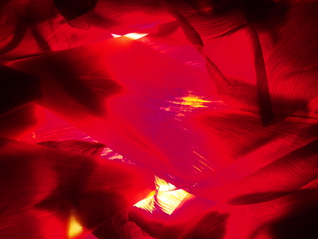 Abstract photography. Red petals of tulips on the lumen. Background.