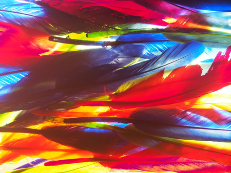 Red, green, yellow, blue feathers. Background photo. Texture.