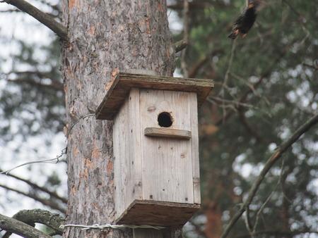 Starling near the birdhouse. Artificial bird's nest. Wildlife. 版權商用圖片