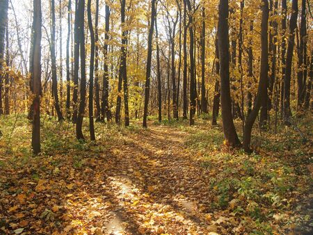 Path in the autumn Park. Defoliation. Red, yellow, and brown leaves of the trees. The leaves on the ground. Landscape. Stok Fotoğraf