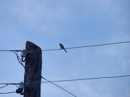 One Wagtail sitting on the electric wires. Wild bird. Reklamní fotografie