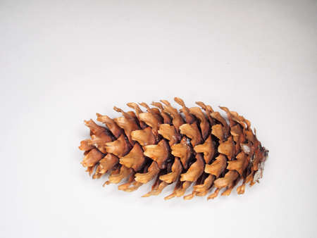 One pine cone on a white background. Texture. Close up. 免版税图像