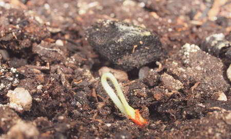 A small green sprout shoots up from the ground. Close-up.