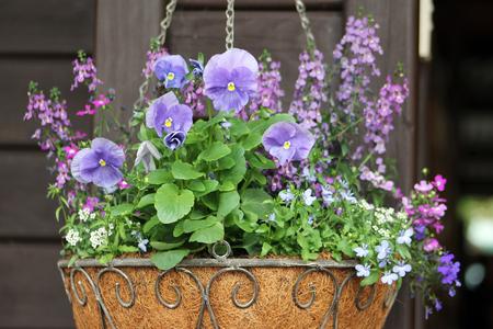 flower basket: Hanging flower basket