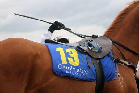 mounting: Jockey Mounting Thoroughbred Horse