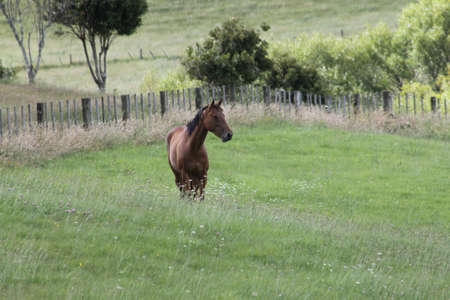 filly: Bay horse in field Stock Photo