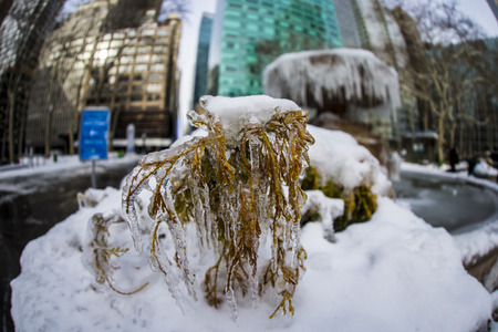 Ice covered plant in Bryant Park in New York City.