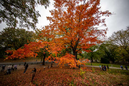 The colorful trees near The Mall in Central Park in Central Park, New York City Фото со стока