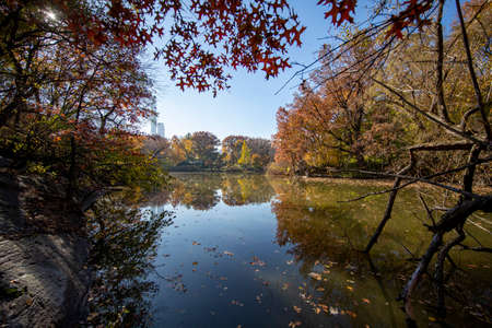 Trees reflect off the Lake in Central Park, New York City