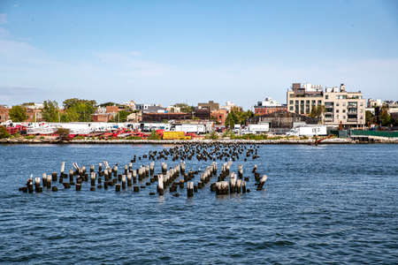 Birds sit on pilings on the East River in New York City Фото со стока
