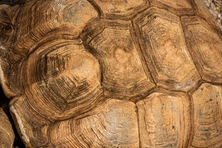 large tortoise shell pattern background and texture