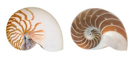 seashell half inside Standard-Bild