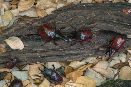 grubs fight in forest with wood and leaves photo