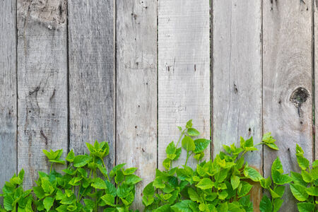 wooden wall with leaf photo