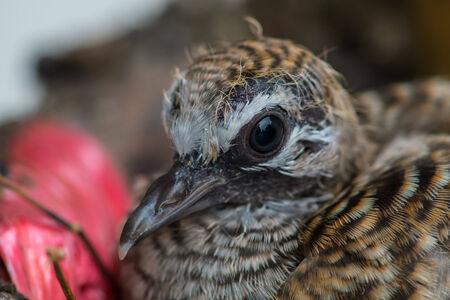 little bird in its nest photo