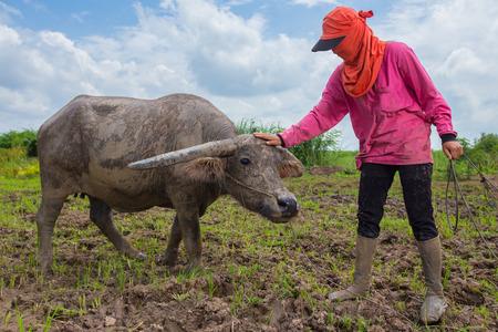 Thai farmer Streichelzoo Büffel auf Boden nassen Boden