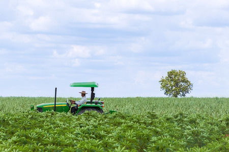 Thai farmer driving tractor in the field of cassava and sugar cane Standard-Bild