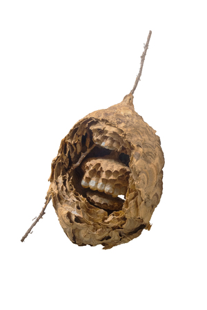 Dried wasp nest isolated on white background 版權商用圖片 - 119770457