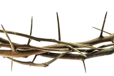 Close up photograph of branches with thorns isolated on white background Stock Photo