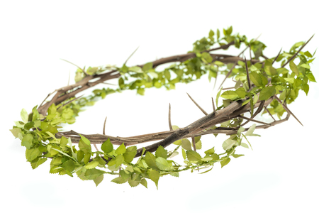 Thorn crown with leaves on white background 免版税图像