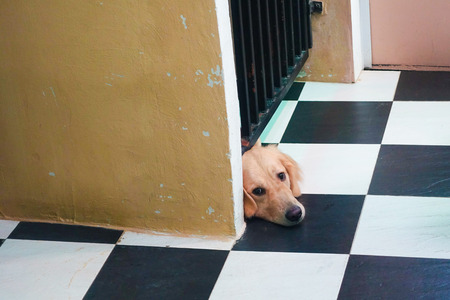 Dog trying to pass through fence, stuck its head in the gap between fence and ground