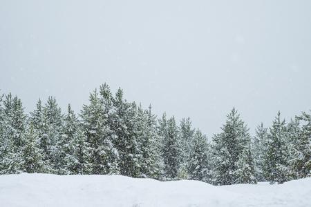 Trees in snow storm minimal background Stok Fotoğraf