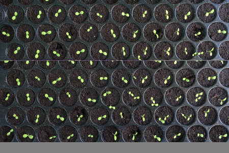 Seedlings in round patterned container Stock fotó