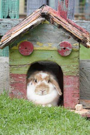 Cute rabbit resting comforatbly in his little wooden house Reklamní fotografie