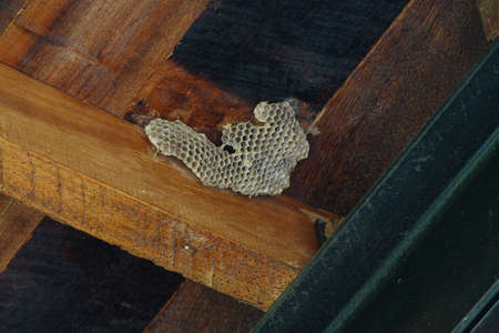 Dried behive stick on the wooden ceiling