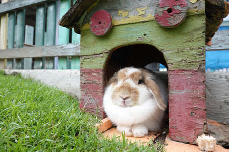 Cute rabbit resting comforatbly in his little wooden house Stock fotó