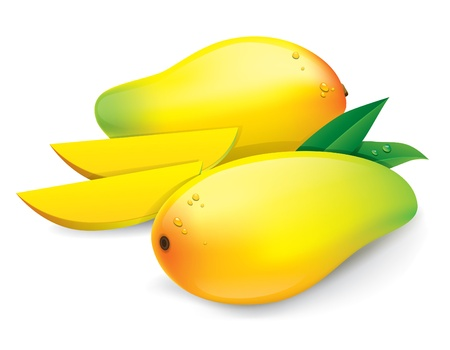 Mango, Isolated On White Background Vector