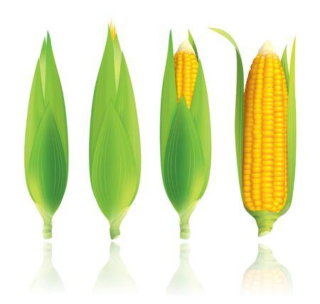 Corn-Darstellung auf wei�em Hintergrund Illustration